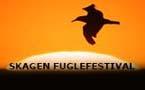 MAJ: Skagen Fugle Festival